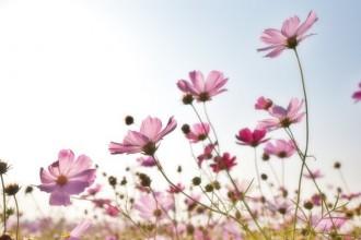 Co nám prozradí květiny?